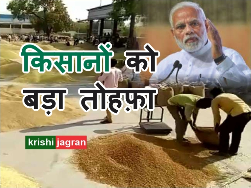 किसानों को तोहफ़ा: 13 राज्यों में सरकार एमएसपी पर खरीदेगी चना और मसूर, उपज की होगी अच्छी बिक्री