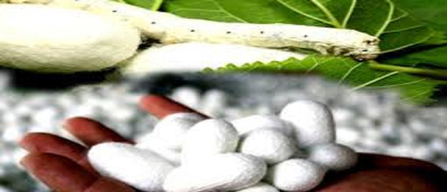 कम लागत में शुरू करें रेशम उत्पादन, सरकार दे रही है 50% से अधिक सब्सिडी