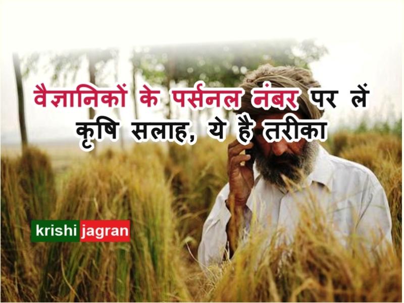 Kisan Call Centre: किसान सुबह 6 से रात 10 बजे तक वैज्ञानिकों से ले सकते हैं सलाह, ये है मोबाइल नंबर