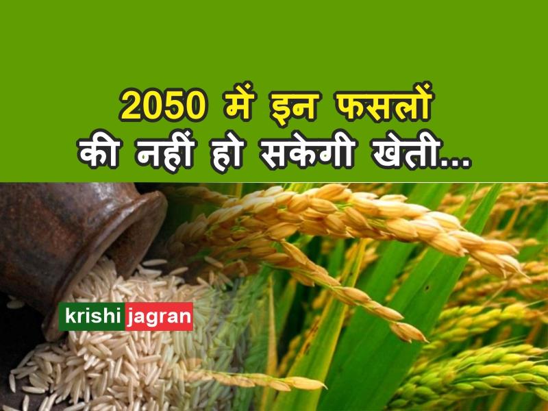 शोधः 2050 के बाद नहीं हो सकेगी धान-गेहूं की खेती, जल संकट बनेगी बड़ी समस्या