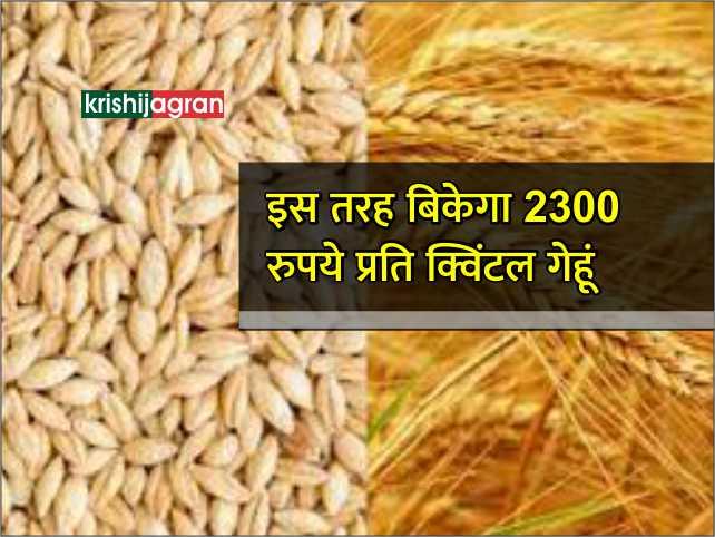 इस फॉर्मूले के तहत किसानों का गेहूं  2300 रुपये प्रति क्विंटल बिकेगा