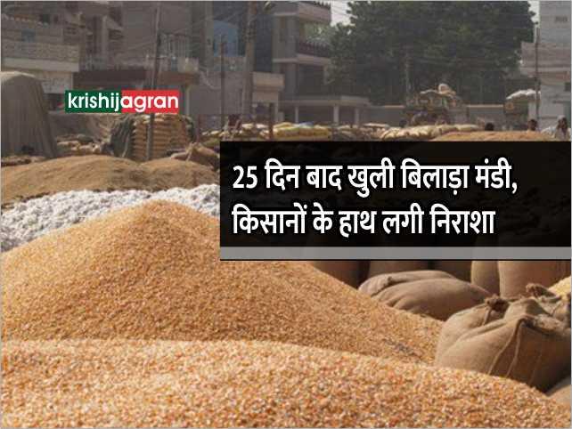 25 दिन बाद खुली बिलाड़ा मंडी, बिक्री न होने पर खाली हाथ लौटे किसान