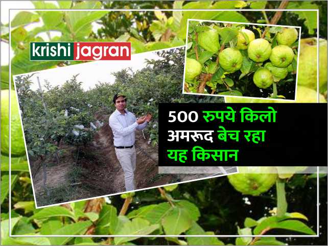 500 रुपये किलो अमरूद बेच रहा भारत का यह किसान