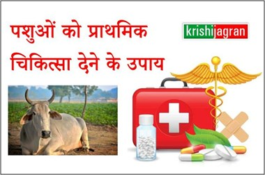 पशुओं के लिए आपातकालीन स्थिति में अपनाएं प्राथमिक चिकित्सा के 5 आसान उपाय