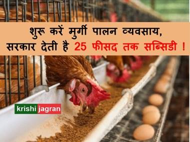 Poultry farming loan: ऐसे शुरू करें मुर्गी पालन व्यवसाय, सरकार देती है 25 फीसद तक सब्सिडी !