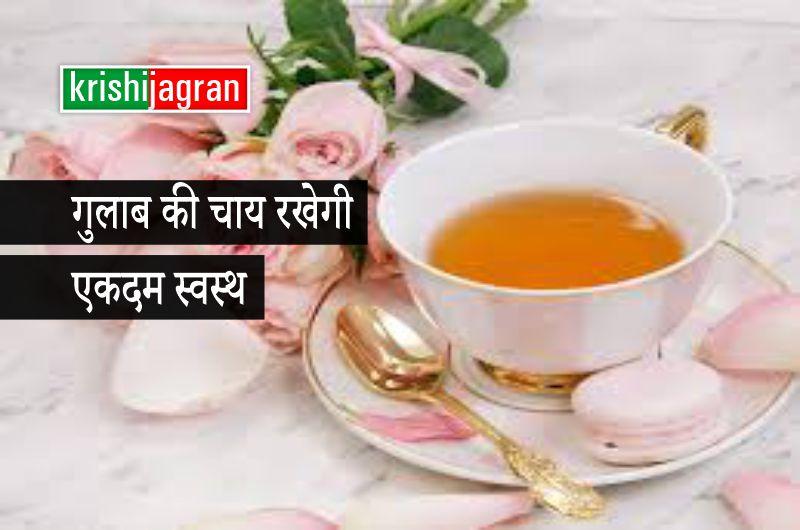गुलाब की चाय रखेगी इम्यूनिटी सिस्टम को मजबूत, 5 मिनट में ऐसे करें तैयार
