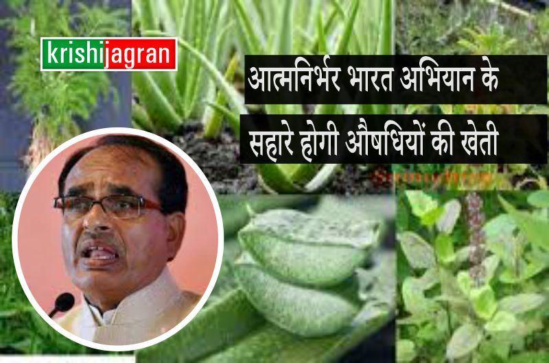 Aatmanirbhar Bharat Abhiyan के सहारे किसान करेंगे औषधियों की खेती, ये राज्य बना रहा है योजना