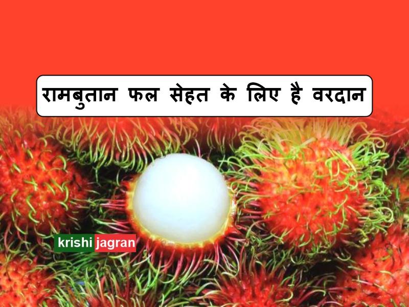 रामबुतान फल सेहत के लिए है वरदान, जानिए फायदें