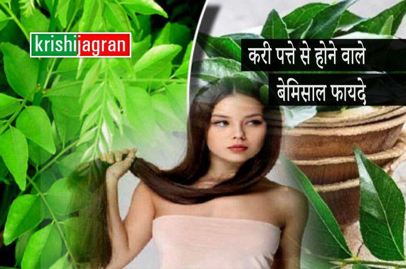 Curry Leaves: मुठ्ठी भर करी पत्तों में छिपा है खूबसूरती का राज, इन 4 तरीकों से करें इस्तेमाल