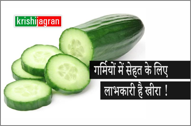 गर्मियों में कूल-कूल रहने के लिए खाएं खीरा, पाचनतंत्र और किडनी के लिए हैं लाभकारी
