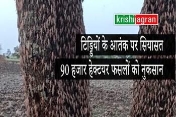 टिड्डियों के आतंक पर बीजेपी-कांग्रेस में छिड़ी जंग, 90 हजार हेक्टयर फसलों को नुकसान