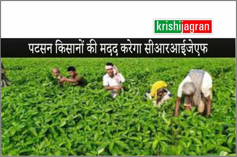 पटसन किसानों की तकनीकी मदद करने के लिए आगे आया सीआरआईजेएफ