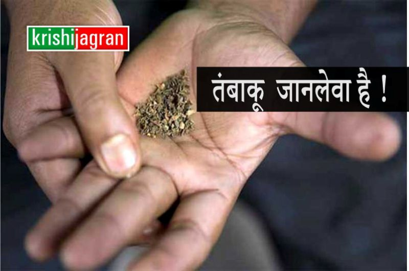 World No Tobacco Day: तंबाकू के सेवन से होती हैं जानलेवा बीमारियां, जानिए इसके नुकसान