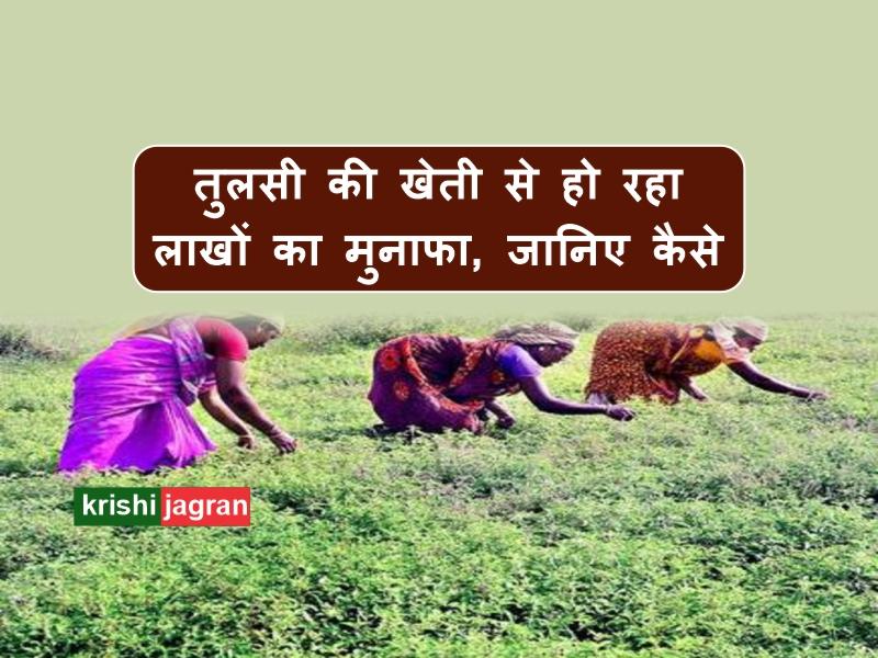 तुलसी की खेती कर महिला किसानों ने लहराया परचम, कमाती है लाखों का मुनाफा