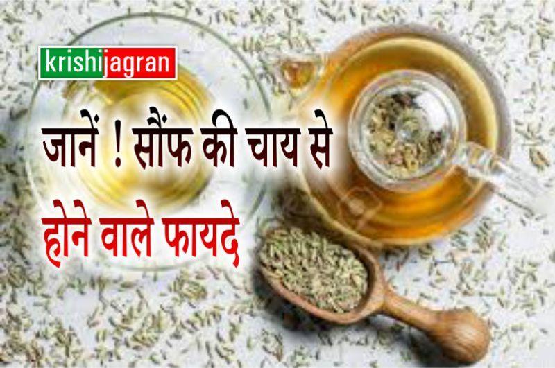 Fennel Tea Benefits: सौंफ की चाय करती है सेहत से जुड़ी कई बीमारियों का इलाज, मिनटों में हो जाएगी तैयार