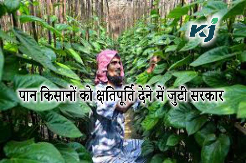 पान किसानों को क्षतिपूर्ति देने में जुटी सरकार