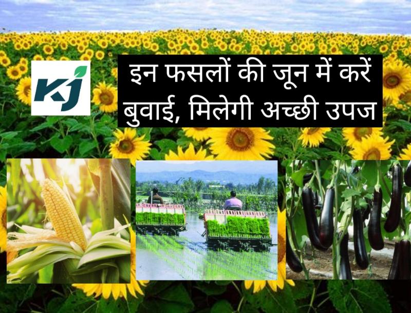 जून में बुवाई: ज्यादा उपज प्राप्त करने के लिए किसान जून माह में कौन –सा कृषि एवं बागवानी कार्य करें