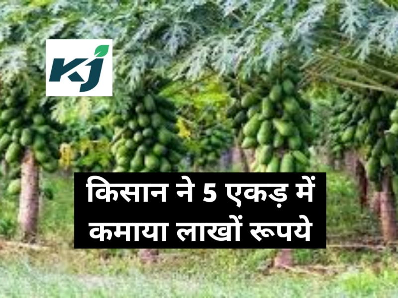 किसान ने 5 एकड़ किन्नू के बाग में की नींबू, चना, पपीता और गेंदा की खेती, हो रहा लाखों रुपए का मुनाफ़ा