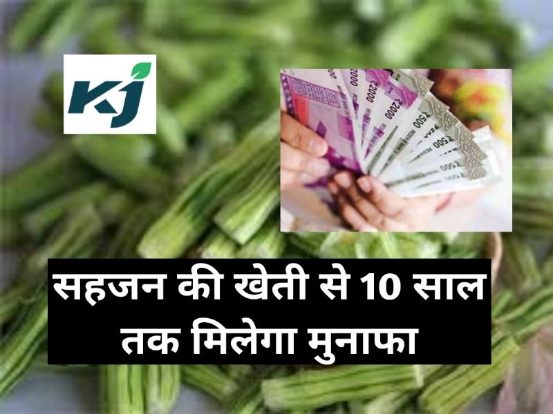 सिर्फ 50 हजार रुपए की लागत से शुरू करें सहजन की खेती, मिलेगा बेहतर मुनाफ़ा !