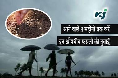 Monsoon 2020:  किसान आने वाले 3 महीनों तक करें इन औषधीय फसलों की बुवाई, मानसून की बारिश से मिलेगा अच्छा उत्पादन