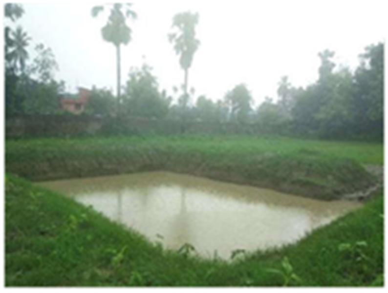 Pond Based Jute Cultivation
