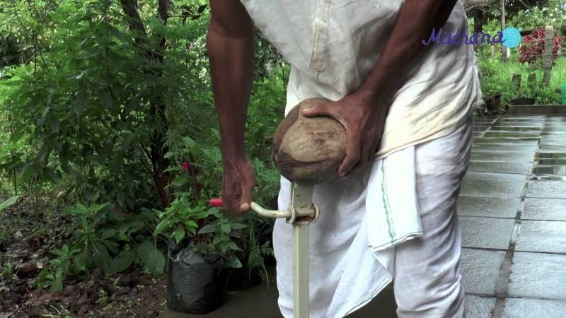 main coconut