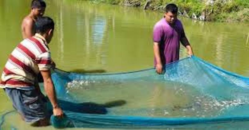fish palan