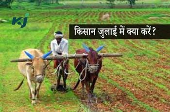 जुलाई में इन कृषि कार्यों पर दें ज्यादा ध्यान, मिलेगा फसल का अच्छा उत्पादन
