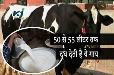 50 से 55 लीटर तक दूध देती है हरधेनु गाय, इस नस्ल के सीमन के लिए यहां करें संपर्क