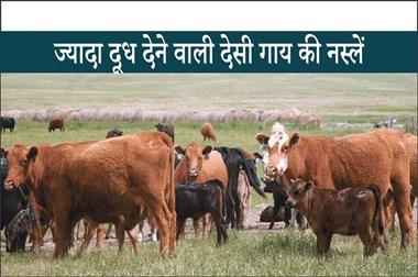 High Demanding Cattle Breeds: भारत की टॉप 5 उच्च मांग वाले दूध उत्पादन वाली मवेशी नस्लें
