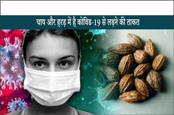 Covid-19 treatment: चाय और हरड़ में है कोविड-19 से लड़ने की क्षमता, IIT दिल्ली के वैज्ञानिक ने किया शोध