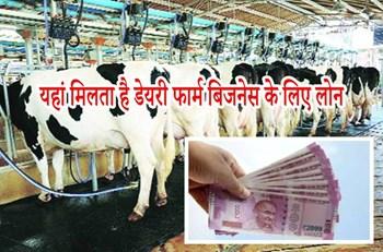 Dairy Farm Business: डेयरी फार्म के बिजनेस के लिए लोन मुहैया करने वाले प्रमुख बैंक और आवेदन प्रक्रिया