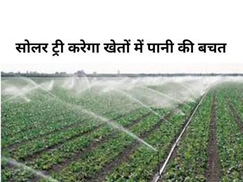 Solar Tree:  बिना बिजली फसलों की सिंचाई करेगा यह साधन, खेतों में बचाएगा पानी की एक-एक बूंद