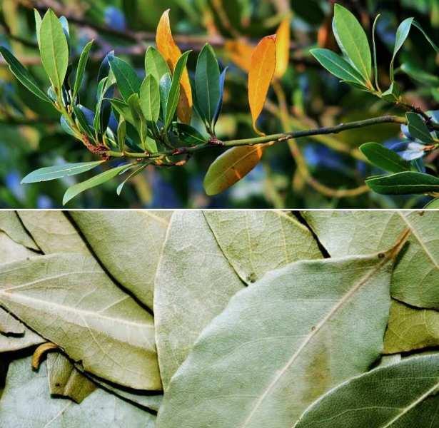 by leaf