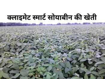 किसान अपनाएं क्लाइमेट स्मार्ट सोयाबीन की खेती, होगा अच्छा मुनाफा !