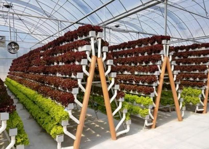 Hydroponic Retail Store
