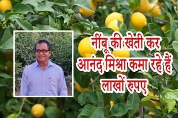 नौकरी छोड़ थाई नींबू की खेती कर आनंद मिश्रा कमा रहे हैं लाखों रुपए, जानिए इनकी सफलता की कहानी
