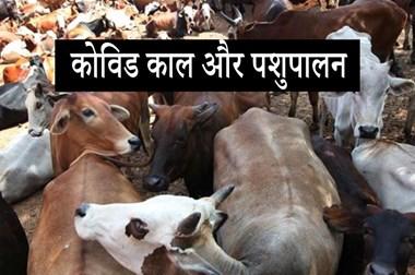 कोविड -19: विश्व में पशु स्वास्थ्य परिप्रेक्ष्य