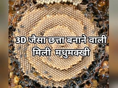 मधुमक्खी की ये प्रजाति बनाती है फूलों जैसा दिखने वाला 3D छत्ता, जानिए इसकी खासियत