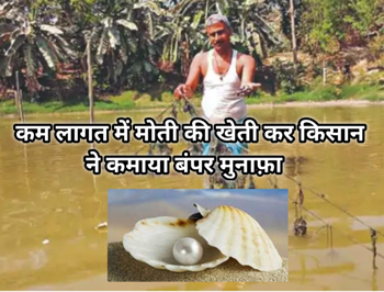500 रुपए की लागत से मोती की खेती कर कमाएं 5 हजार, मन की बात में पीएम मोदी ने की इस किसान की तारीफ