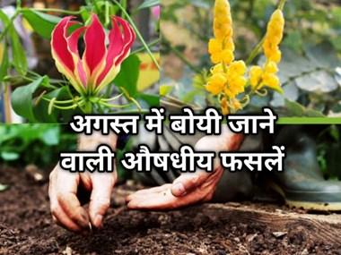 अगस्त में  बुवाई: किसान ज़रूर लगाएं ये 2 औषधीय फसल, सही समय पर खेती करने से मिलेगा अच्छा उत्पादन !