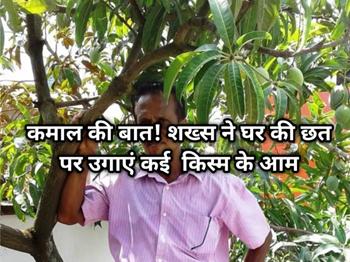 केरल के शख्स ने घर की छत पर उगाया 40 से अधिक किस्म के आम
