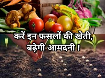 अगस्त में बुवाई: किसान ज़रूर करें इन सब्जियों की खेती, बाजार में बढ़ती मांग से मिलेगा बंपर मुनाफ़ा