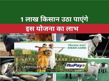 Pashu Kisan Credit Card Scheme: इस राज्य में जारी होंगे 1 लाख क्रेडिट कार्ड, दोगुनी होगी किसानों की आय