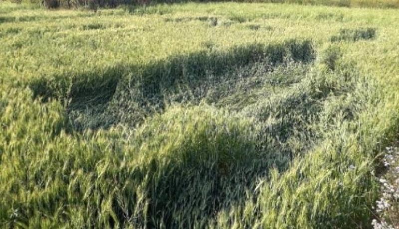 crop nuksan