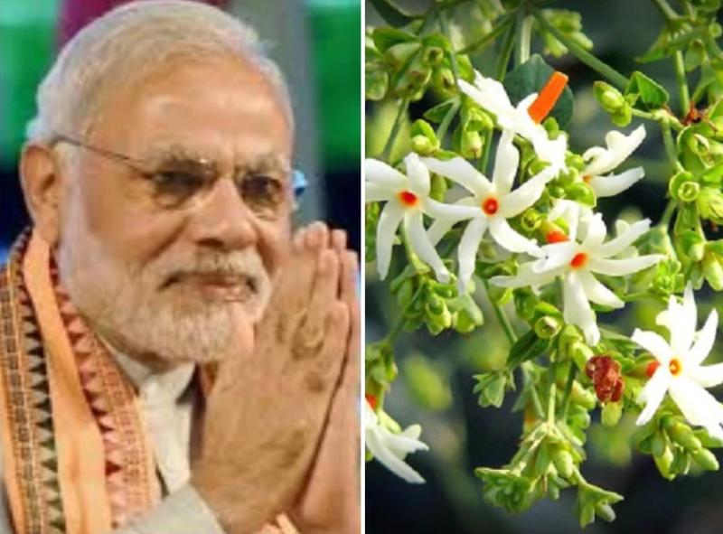 Ram Mandir Bhumi Pujan के दौरान लगा परिजात का ...