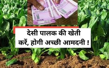 आधुनिक तरीके से करें देसी पालक की खेती, होगी बंपर कमाई !