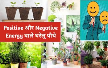 घर में इन 3 Negative Energy वाले पौधों को लगाने से बचें और लगाएं ये 4 Positive Energy वाले पौधे