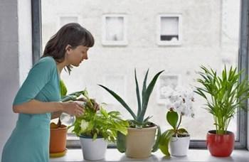 पौधों को कीट और रोगों से बचाने के लिए घर में मिनटों में तैयार करें ये प्राकृतिक कीटनाशक