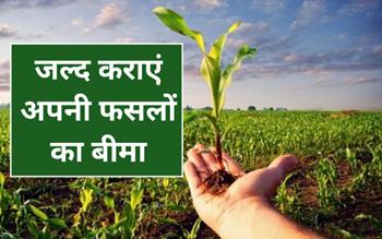 PM Fasal Bima Yojana: मध्य प्रदेश के किसान 18 अगस्त तक करवा सकेंगे फसल बीमा, जल्द करें इस लिंक से आवेदन